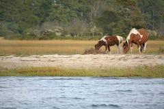 Wilde poneys Stock Foto's