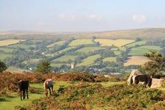 Wilde poneys op Bonehill neer Stock Afbeeldingen