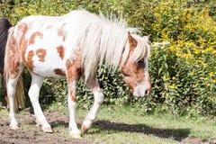 Wilde Ponys Lizenzfreies Stockfoto