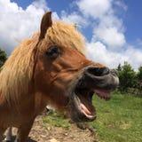 Wilde Ponys Grayson Highlands State Park Virginias Stockfoto