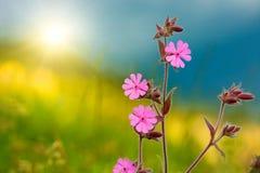 Wilde purpere bloem Stock Fotografie