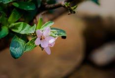 Wilde purpere bloemen binnen stroomopwaarts Royalty-vrije Stock Fotografie
