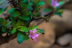 Wilde purpere bloemen binnen stroomopwaarts Stock Afbeeldingen