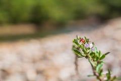 Wilde purpere bloemen binnen stroomopwaarts Royalty-vrije Stock Foto