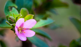 Wilde purpere bloemen binnen stroomopwaarts Royalty-vrije Stock Afbeelding