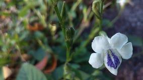 Wilde purpurrote Blume Stockbilder
