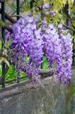 Wilde purpurrote Blumen Stockbilder