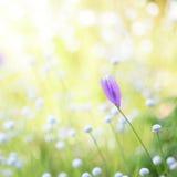 Wilde purpurrote Blumen Lizenzfreies Stockbild