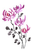 Wilde purpurrote Blumen des Herbstes auf einem weißen Hintergrund watercolor Getrennt Lizenzfreie Stockbilder