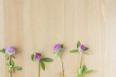 Wilde purpurrote Blumen vereinbarten in Folge auf hölzernem Hintergrund Beschneidungspfad eingeschlossen Flache Lage Lizenzfreies Stockbild
