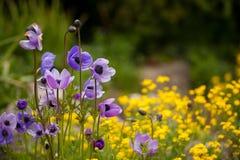 Wilde purpurrote und gelbe Blumen Stockbilder