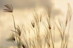 Wilde Rasenflächen Lizenzfreie Stockfotografie