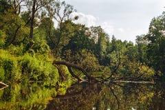 Wilde rivier Stock Foto's
