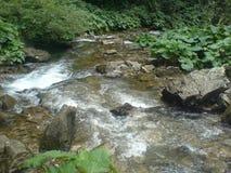 Wilde rivier in Apuseni Royalty-vrije Stock Afbeelding