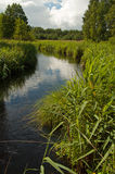 Wilde rivier in Polen Verticale mening Royalty-vrije Stock Afbeelding
