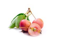 Wilde rode appelen Stock Afbeelding
