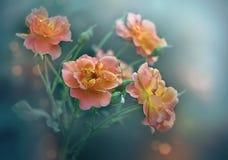 Wilde Rosen-Blumen lizenzfreies stockfoto