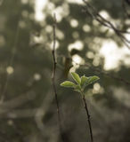 Wilde Rosenblätter bedeckt mit Morgentau Stockfotos