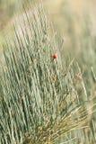 Wilde rote Beeren auf einem Busch Lizenzfreies Stockfoto