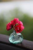 Wilde rote Rosen im Türkisglasvase mit Regen fällt Lizenzfreie Stockfotos