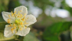 Wilde schöne tropische Blume Lizenzfreie Stockfotografie