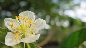 Wilde schöne tropische Blume Stockfoto