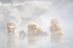 Wilde Schnee-Affe-Gruppen-Therapie: Pflegen im Nebel Stockfotos