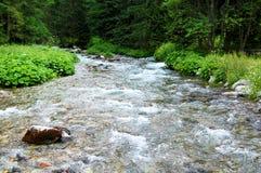 Wilde snelle bergstroom in het midden van het bos Royalty-vrije Stock Afbeeldingen
