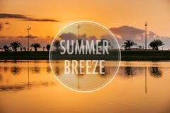 Wilde Sommergräser und Feldblumen im Rhythmus mit dem Wind Stockfotos