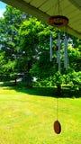 Wilde Sommergräser und Feldblumen im Rhythmus mit dem Wind Stockbilder