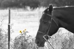 Wilde Sonnenblumen auf einer Pferderueckenfahrt lizenzfreie stockfotografie