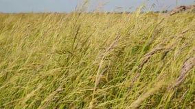 Wilde steppe met groen gras die in de wind slingeren stock videobeelden