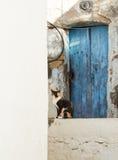Wilde straatkat, droevige kat, straatkat, sociale kwestie Stock Fotografie