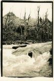 Wilde stroom van een bergrivier royalty-vrije stock foto