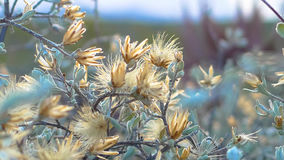 Wilde struik met gele bloemen Stock Afbeeldingen