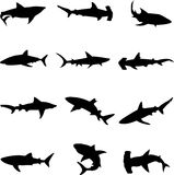 Wilde Tiefseehaifische Stockfotos