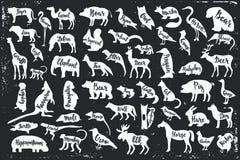 Wilde Tier-Schattenbilder mit Beschriftung vektor abbildung