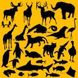 Wilde Tiere Stockfotos