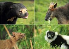 Wilde Tiere Stockbild