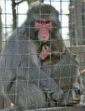 Wilde Tiere in einem Käfig Lizenzfreies Stockfoto