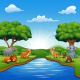 Wilde Tiere genießen Natur durch den Fluss