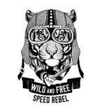Wilde Tiger Wildkatze ist wildes und freies T-Shirt Emblem, Schablone Radfahrer, gezeichnete Illustration des Motorraddesigns Han stock abbildung