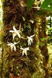 Wilde tropische Anlage, die im tiefen moosigen Regenwald wächst Lizenzfreies Stockfoto