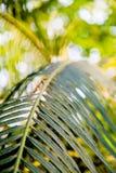 Wilde tropische wildernis, exotische bladeren Stock Afbeeldingen