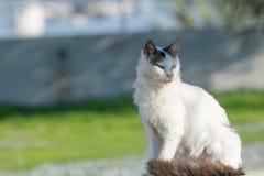 Wilde und obdachlose Katze auf Asphaltboden Verlassene Katze, die herein schaut Lizenzfreies Stockbild