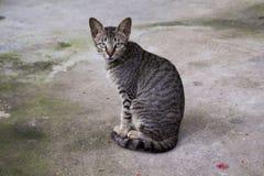 Wilde und obdachlose Katze auf Asphaltboden Verlassene Katze, die in camera schaut Stockfotos