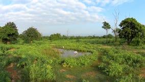 Wilde Vögel in der Reserve stock video