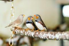 Wilde Vögel, die auf einer Stange sitzen Stockbild