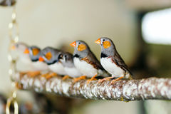Wilde Vögel, die auf einer Stange sitzen Stockbilder