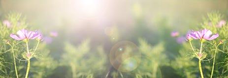 Wilde van de de bloemenzomer of daling banner als achtergrond Stock Foto